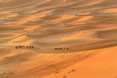 Caravan of Camels in Erg Chebbi Sand dunes near Merzouga, Morocco Royalty Free Stock Images