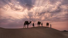 Caravan of camels in Sahara desert  ar sunset stock photography