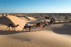 Caravan of camels in the Sand dunes desert of Sahara Royalty Free Stock Photography