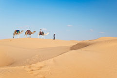 Caravan of camels in the Sand dunes desert of Sahara Royalty Free Stock Image