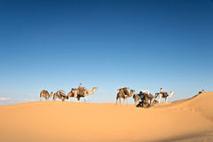 Caravan of camels in the Sand dunes desert of Sahara Stock Image