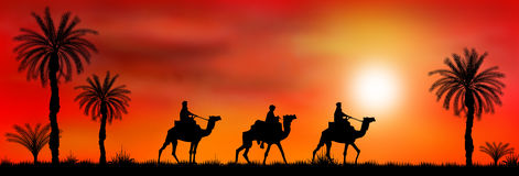 Caravan of camels at sunset Stock Photo