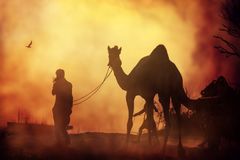 Caravan of camels at sunset in the sand desert. Royalty Free Stock Image
