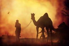 Caravan of camels at sunset in the sand desert. Indian cameleer with camel silhouette in dunes of Thar desert on sunset. Pushkar Mela, India.Pushkar Camel Fair royalty free stock image
