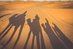 Caravan camels walking shadows projected over orange sand dunes Stock Image