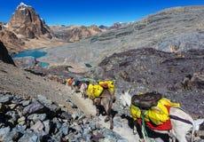 Caravan in Cordillera Stock Afbeeldingen