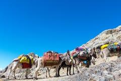 Caravan in Cordillera. Donkey caravan in Cordiliera Huayhuash, Peru, South America Stock Photo