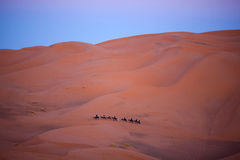 Caravan crossing in Sahara Desert, Morocco Stock Photography
