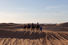 Caravan crossing in Sahara Desert, Morocco Royalty Free Stock Photography