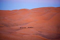 Caravan crossing in Sahara Desert, Morocco Stock Photo