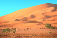 Caravan dei cammelli in deserto del Sahara, Marocco Fotografie Stock Libere da Diritti