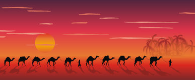 Caravan dei cammelli nel deserto Fotografia Stock