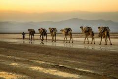 Caravan del cammello che trasportano i blocchetti del sale dal lago Assale Immagini Stock