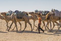 Caravan del cammello nel deserto di Sahara Immagini Stock Libere da Diritti