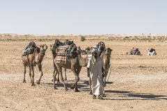 Caravan del cammello nel deserto di Sahara Fotografia Stock