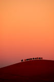 Caravan in the desert Stock Image