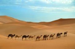 Caravan in desert Stock Image
