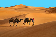 Caravan in desert Royalty Free Stock Image