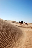 Caravan in desert Sahara Royalty Free Stock Images