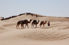 Caravan in desert Sahara royalty free stock photo