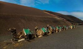 Caravan di Smal sulla sabbia marrone immagini stock