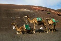 Caravan di Smal sulla sabbia marrone fotografie stock
