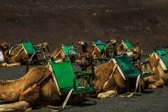 Caravan di Smal sulla sabbia marrone immagine stock