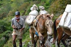 Caravan die van ezels levering in het Himalayagebergte dragen Stock Foto