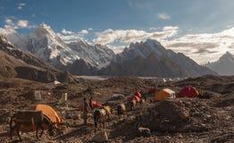 Caravan of donkeys walk pass the colorful camping tents Stock Photos