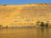 Caravan in the dunes by the Nile river Royalty Free Stock Photography