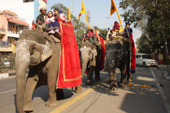 Caravan of elephants Stock Photos