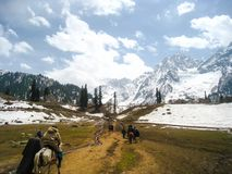Caravan Horses To Sonamarg, Kashmir, India. Caravan horses carrying travellers to snow mountain in Sonamarg, Kashmir, India stock photos