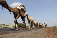 CARAVAN INDIANO SPECIALE DI VIAGGIO Fotografie Stock Libere da Diritti