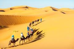 Caravan met bedouins en kamelen in zandduinen in woestijn bij zonsondergang Royalty-vrije Stock Afbeelding