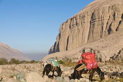 Caravan of mules Royalty Free Stock Photos