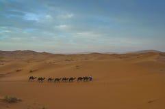 Caravan nel deserto marocchino Fotografia Stock Libera da Diritti