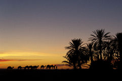 Caravan returning to the oasis during sunset Stock Photography