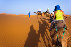 Caravan on Sahara. Camel caravan in the sahara desert royalty free stock image