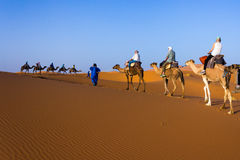 Caravan on Sahara. Camel caravan in the sahara desert stock photos