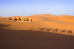 Caravan on Sahara. Camel caravan in the sahara desert stock image