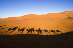 Caravan in the Sahara desert. Early in the morning Stock Image