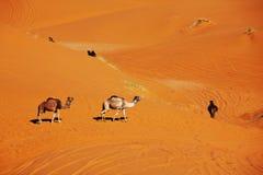 Caravan in desert Stock Images