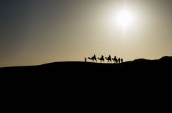 Caravan in the Sahara desert. Early in the morning Royalty Free Stock Photos