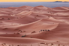 Caravan in Sahara desert Morocco Royalty Free Stock Images
