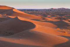 Caravan in Sahara desert Morocco Royalty Free Stock Photography