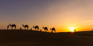 Camel Caravan in the Thar Desert. As the sun sets over the sand dunes of the Thar desert of Rajasthan, the camel caravan prepares to camp before the cold of the Royalty Free Stock Images