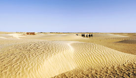 Caravan of tourists passing desert lake on camels Stock Photography