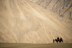 Caravan travellers riding camels Nubra Valley Ladakh ,India Royalty Free Stock Image