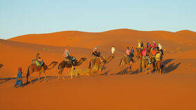 Caravan turistico del cammello in deserto Fotografia Stock