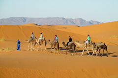 Caravan turistico del cammello in deserto Immagine Stock